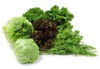 レタス・はくさい・水菜 …